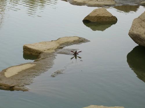 Crayfish Rage