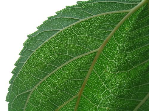 Gorgeous Leaf
