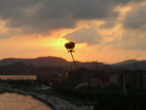 Burning Flower 2