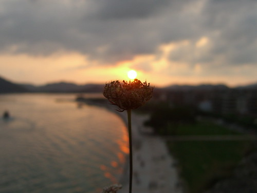 Burning Flower 4