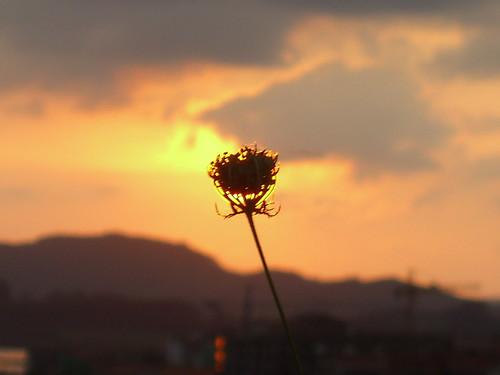 Burning Flower 3