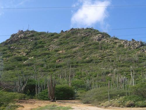 Tallest hill on Aruba