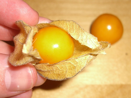 Physalis (open)