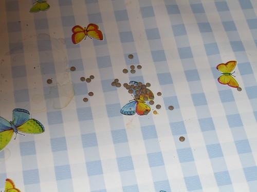 Lentils and Butterflies