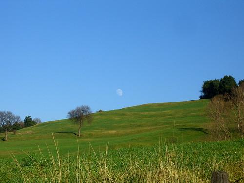 Moon Meadow