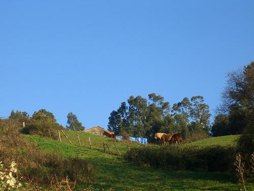 Looking up at horses
