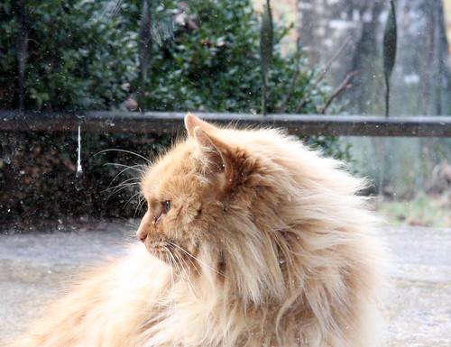 Fluffy Profile