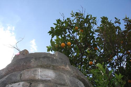 Castle Oranges