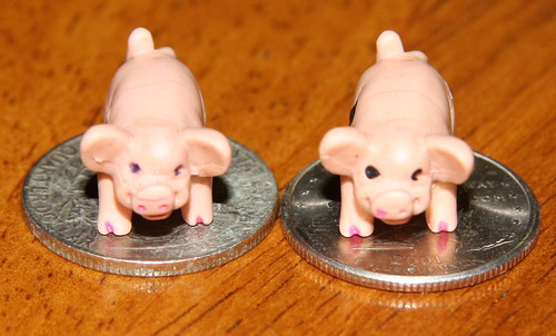 Piggies with quarters for scale