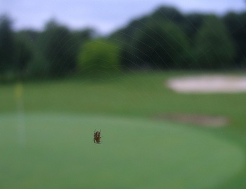 Hotel Aldama - Pitch & Putt Spider