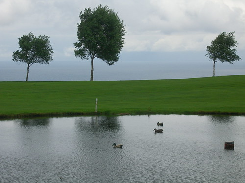 Decoy Golf Course Ducks