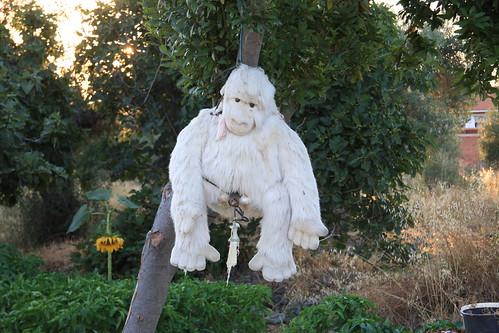 Lynched Albino Ape