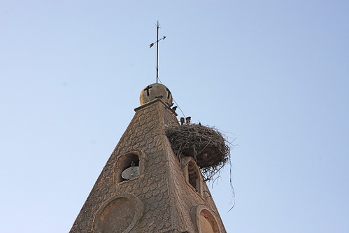 Stork nest on town church