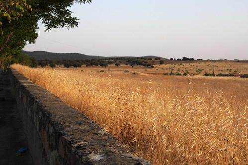 Wheat Wall