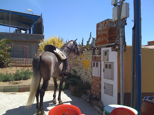 Horse parked at saloon