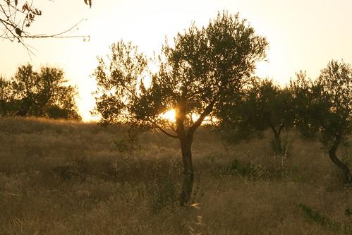 Sunset Through Tree