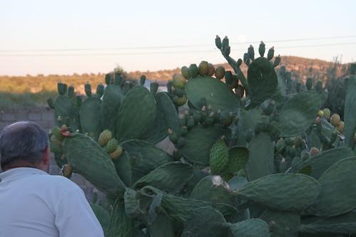 Stealing Cactus Fruit