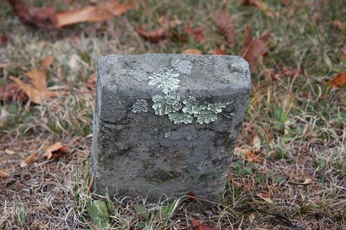 Lichen Grave