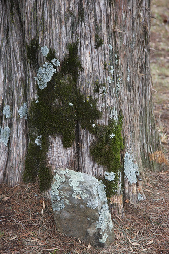 Moss and Lichen and a gravestone