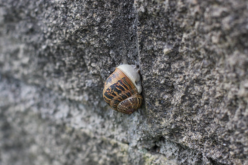 Snail on Stone Wall