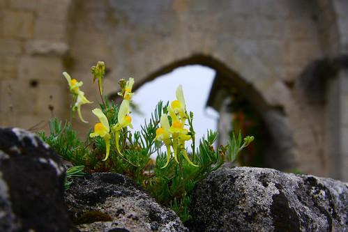 Flowers in Medieval Wall