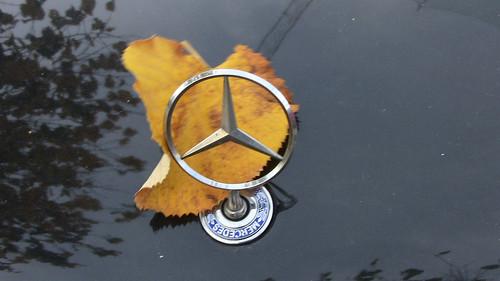 Autumn Benz