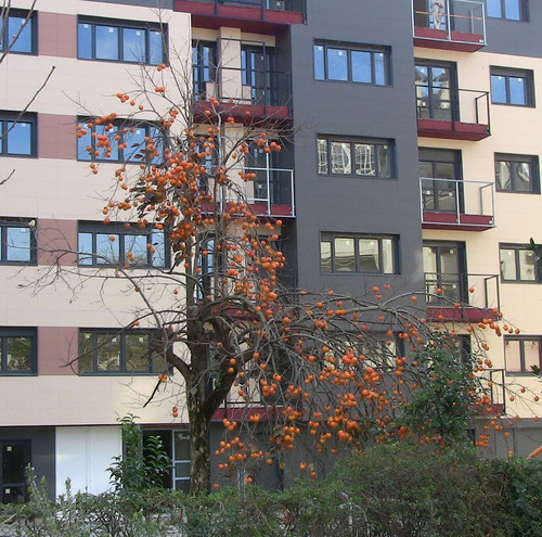 Winter Orange Tree