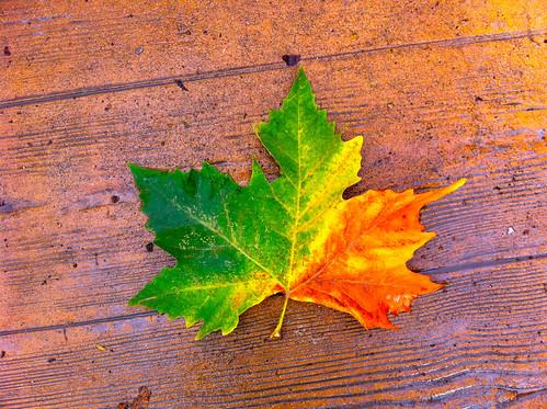 Maple Leaf Autumnal Symbolism