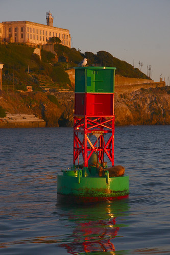 Sealions, Buoy, Sunset, Alcatraz