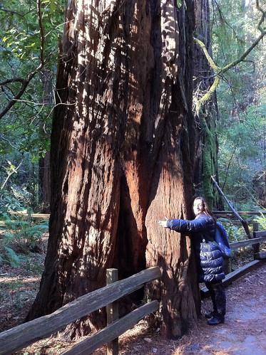 Muir Woods - Redwoods, Marga