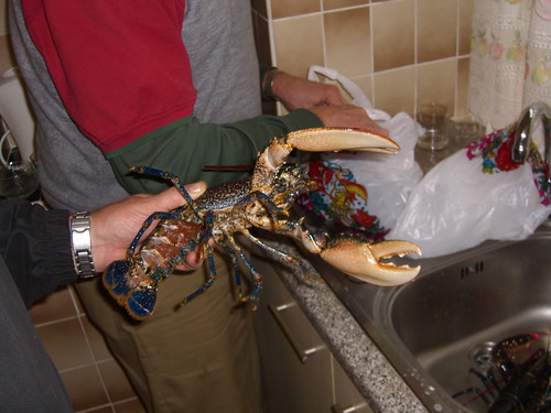Scottish Lobster