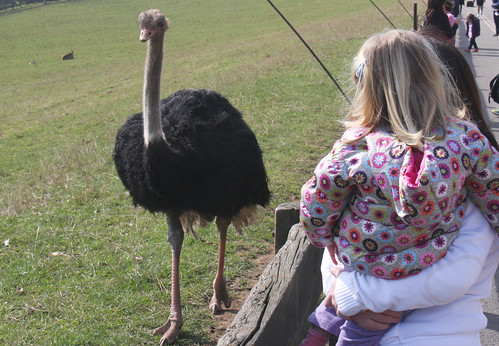 Ostrich coming for Nora