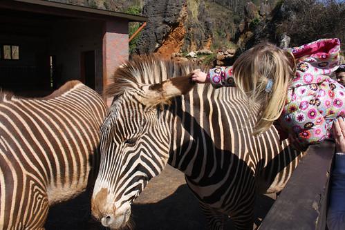 Nora with Zebra