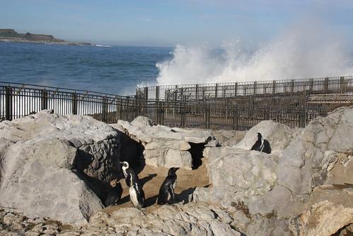 Penguins and Waves in Santander