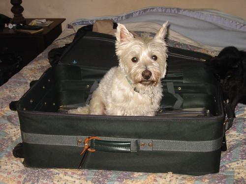 Suitcase Sam